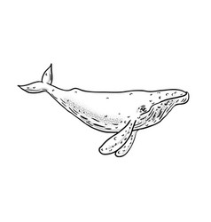 humpback whale drawing side vector image