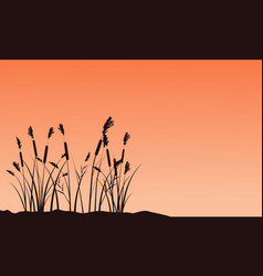 Silhouette of coarse grass on sunset landscape vector