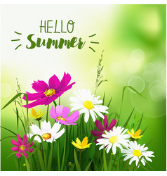 summer wild flowers background vector image
