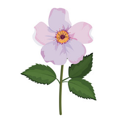 beautiful flower drawing vector image