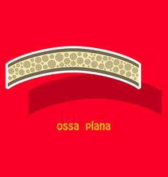 Bone sticker icon single high quality outline vector