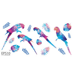 colorful macaw bird and tropical leaf pattern vector image