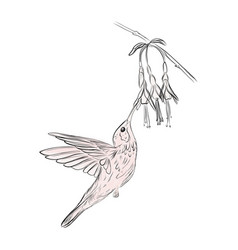 hand-drawn small bird colibri sketch art vector image