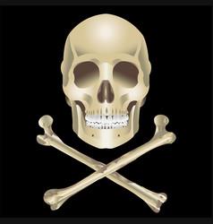 human skull and crossbones vector image