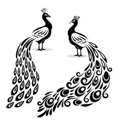 monochrome peacock hand drawn peecoock isolated vector image