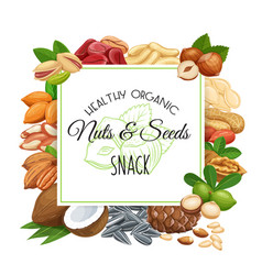 nuts and seeds vector image