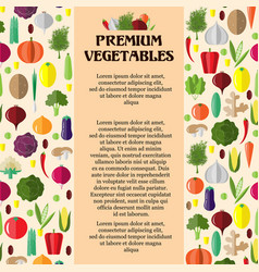 poster with colorful vegetables template vector image
