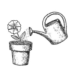 potted flower and watering vector image