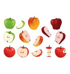 Apple cartoon half full and quarter fruit vector