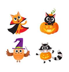 cat kitten owl and raccoon in halloween costumes vector image