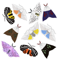 collection moths isolated on white background vector image