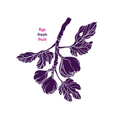 figs symbol tree texture fruit isolate vector image