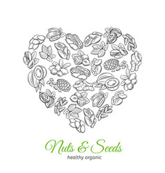 hand drawn nuts and seeds vector image