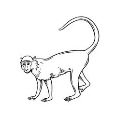 monkey macaque icon vector image