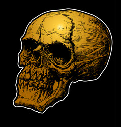 skull hand drawn colored vector image