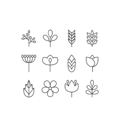 floral icons set vector image vector image