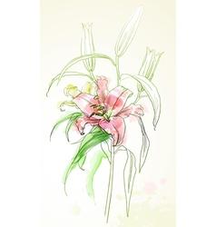 watercolor lily vector image vector image