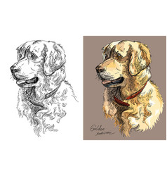 golden retriever in color and black and white vector image