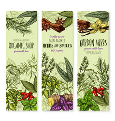 Banners of spices and herbs for shop vector