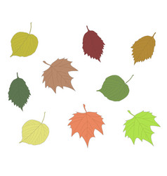 Colorful autumn leaves collection linden maple vector