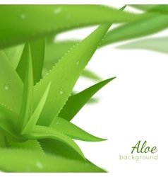 Green Aloe Vera Realistic Background vector image