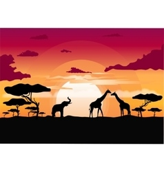 African sunset in the savannah vector image vector image