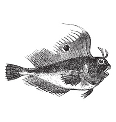 Butterfly blenny fish engraving vector