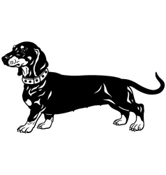 dachshund black white vector image