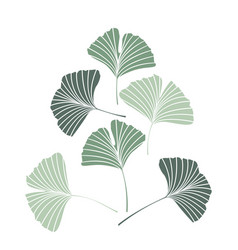 Ginkgo biloba leaves vector