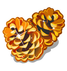 Two golden pinecones isolated on white background vector