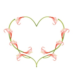 Beautiful Red Anthurium Flowers in Heart Shape vector image vector image