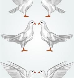 Seamless texture white dove vector image