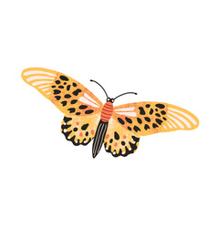 Gorgeous elegant butterfly with bright yellow vector
