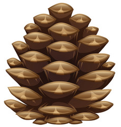 One pinecone in closeup look vector