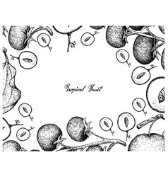 Hand drawn frame of indian jujube and grape tomato vector
