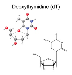 Chemical formula and model of deoxythymidine vector image