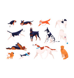 collection adorable dogs different breeds vector image
