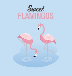 Two flamingos in a lake vector