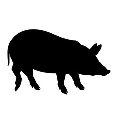 Black and white pig design vector