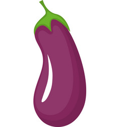 Eggplant fruit on transparent background vector