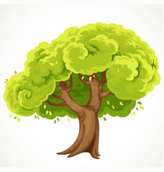 Summe tree with a green foliage drawing isolated vector