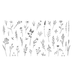 Wild flowers hand drawn field blooming herbs with vector