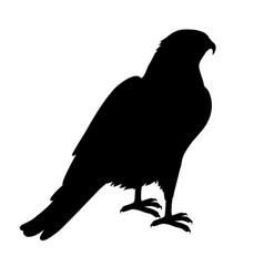 hawk flat design vector image vector image