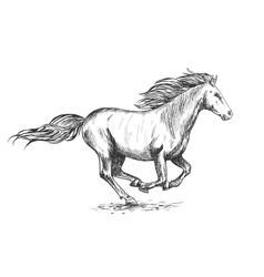 Running gallop white horse sketch portrait vector image