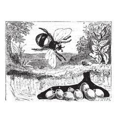 Bumblebee vintage engraving vector