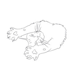 cat lines vector image