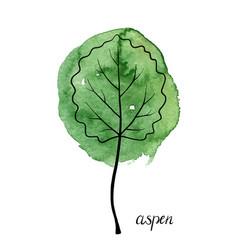 Leaf of aspen tree vector