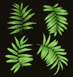 Tropical leaf set vector