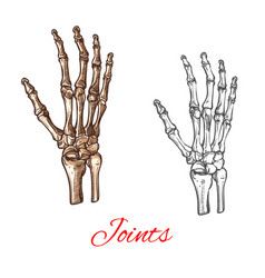 sketch icon of human hand bones or joints vector image