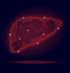 Abstract human liver on vector